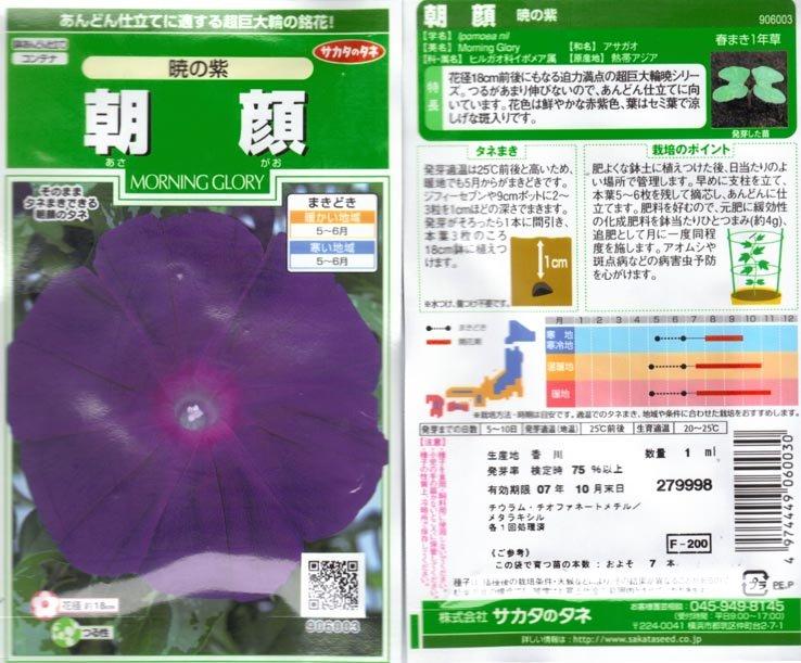 Akatsuki No Muraski, Deep Purple at Dawn, Ipomoea Nil, Japanese Morning Glory Se
