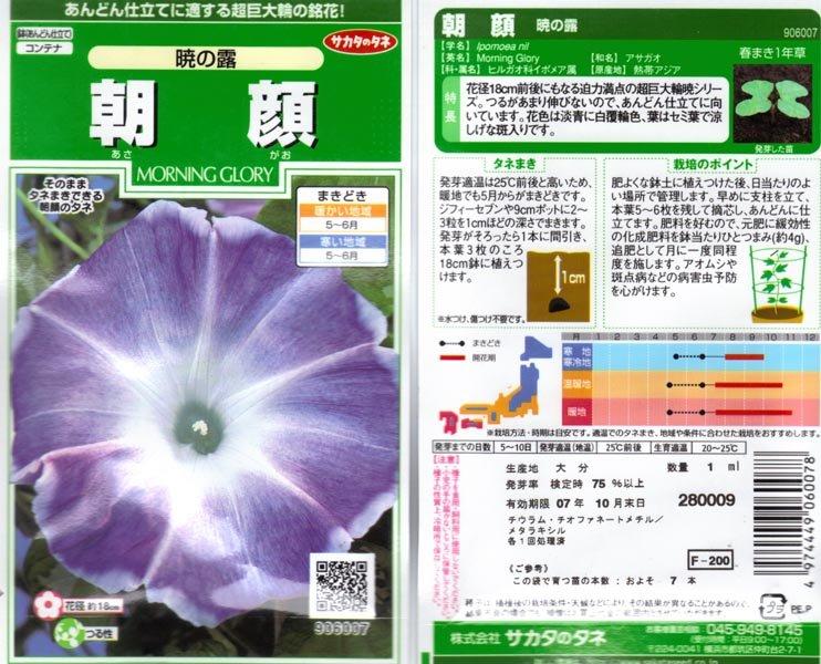 Akatuski No Tsuyu, ''The Dew at Dawn'' Blue Silk, Japanese Morning Glory Seeds