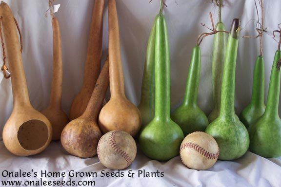 Short Handled Dipper Gourd Seeds (Lagenaria Siceraria) Crafts!