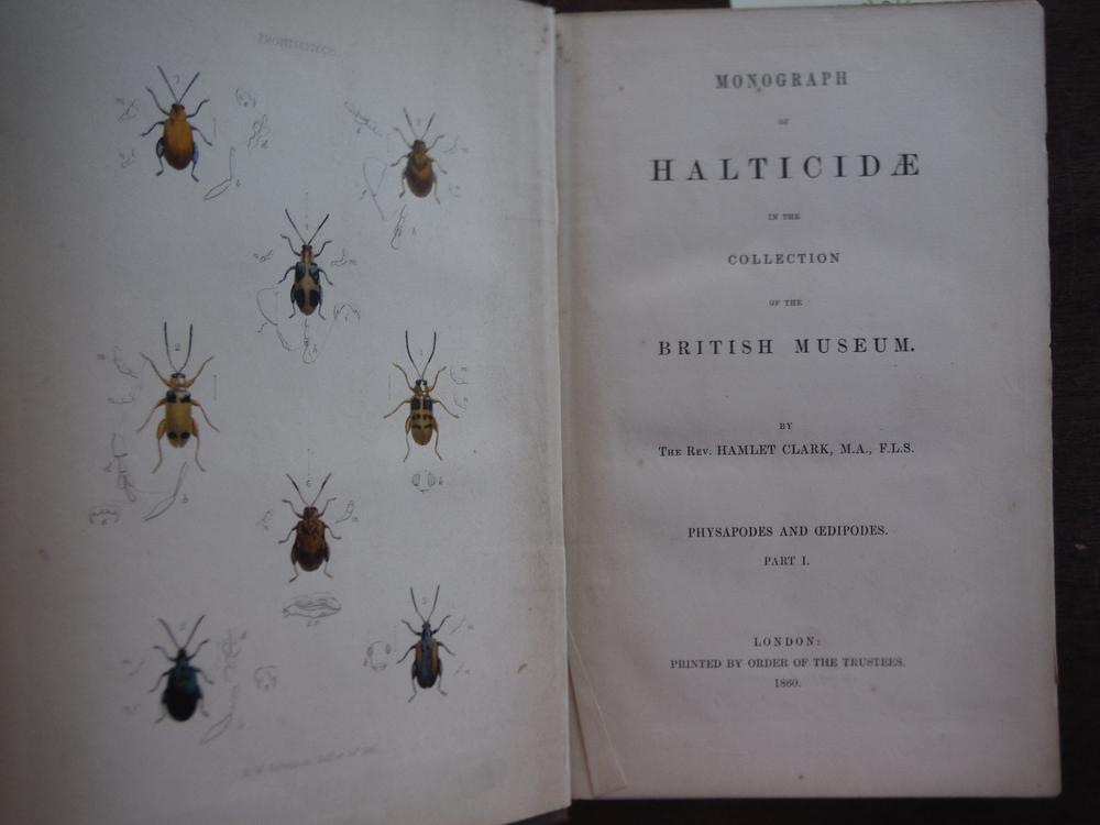 Image 1 of Monograph Of Halticidae In The Collection Of The British Museum. Physapodes And