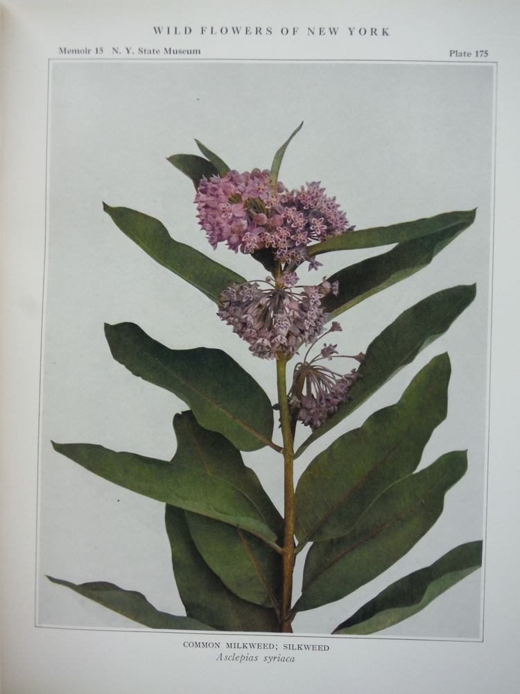 Image 4 of Wild Flowers of New York -- Two Volume Set, (Parts 1 and 2) -- University of the