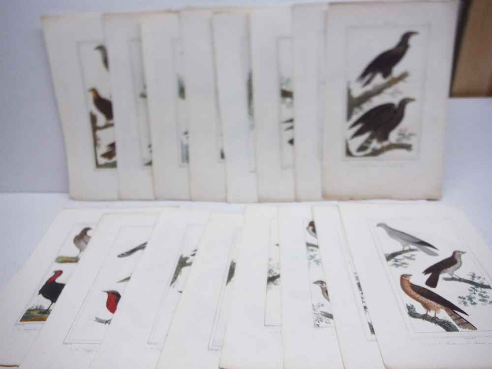 A. C. Vauthier hand colored avian engravings lot of 23 (1827)