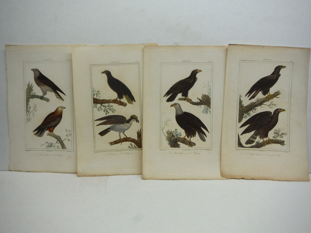 Image 1 of A. C. Vauthier hand colored avian engravings lot of 23 (1827)