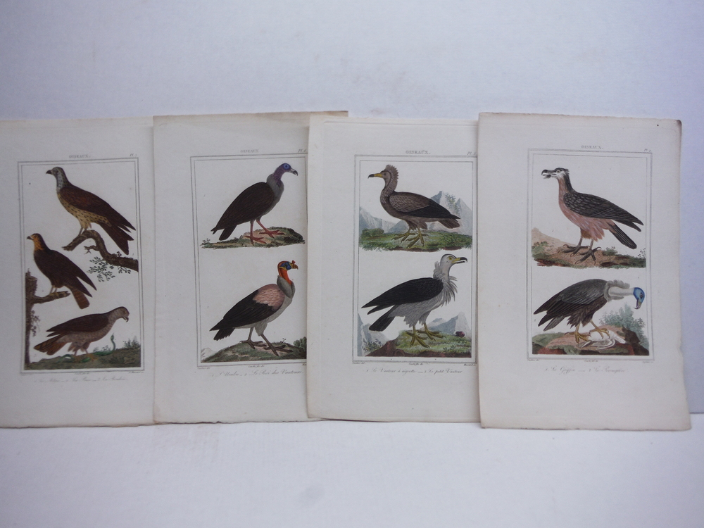 Image 2 of A. C. Vauthier hand colored avian engravings lot of 23 (1827)