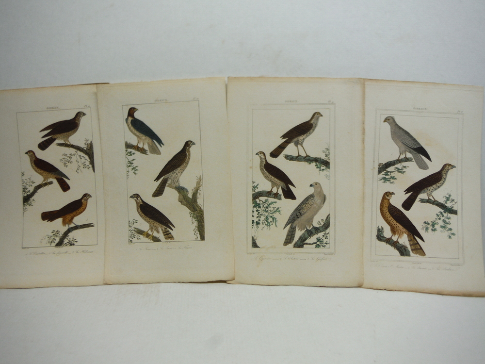 Image 3 of A. C. Vauthier hand colored avian engravings lot of 23 (1827)