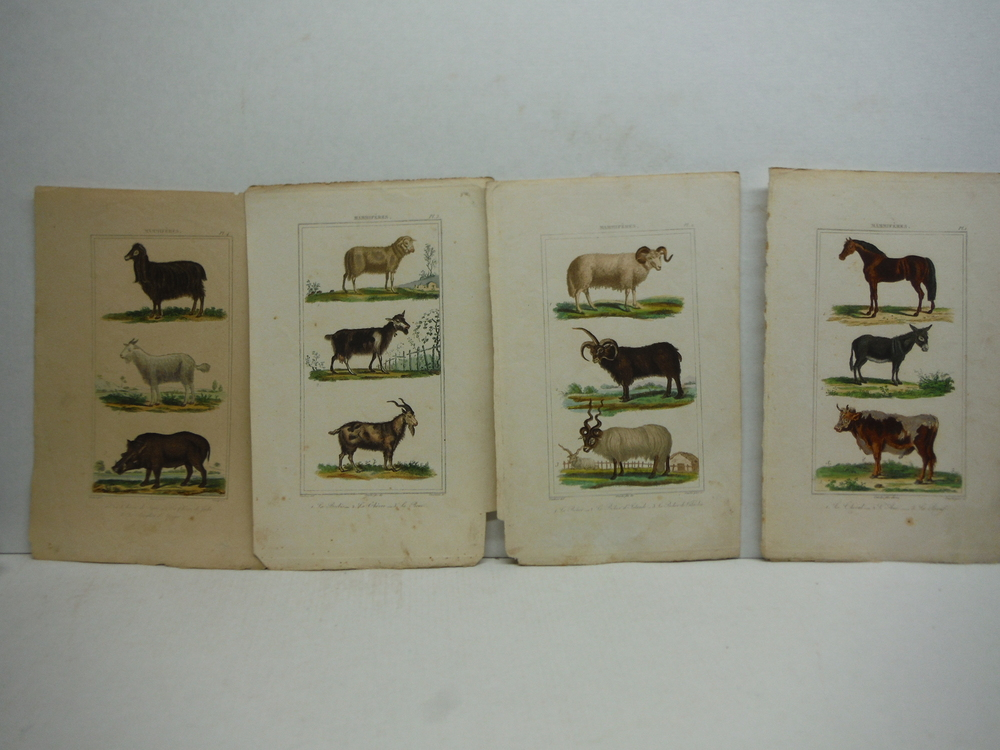 Image 1 of A. C. Vauthier hand colored mammalian engravings lot of 26 (1827)