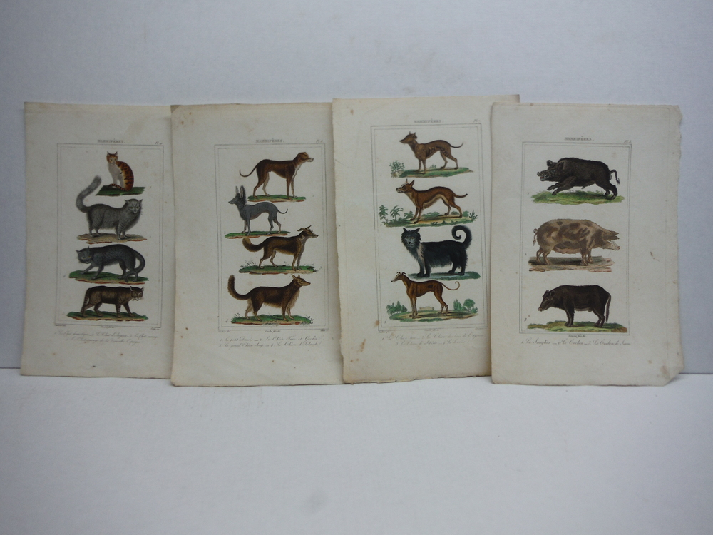 Image 2 of A. C. Vauthier hand colored mammalian engravings lot of 26 (1827)