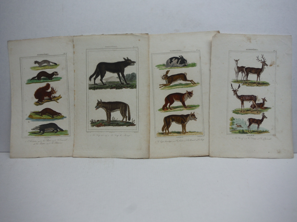 Image 3 of A. C. Vauthier hand colored mammalian engravings lot of 26 (1827)