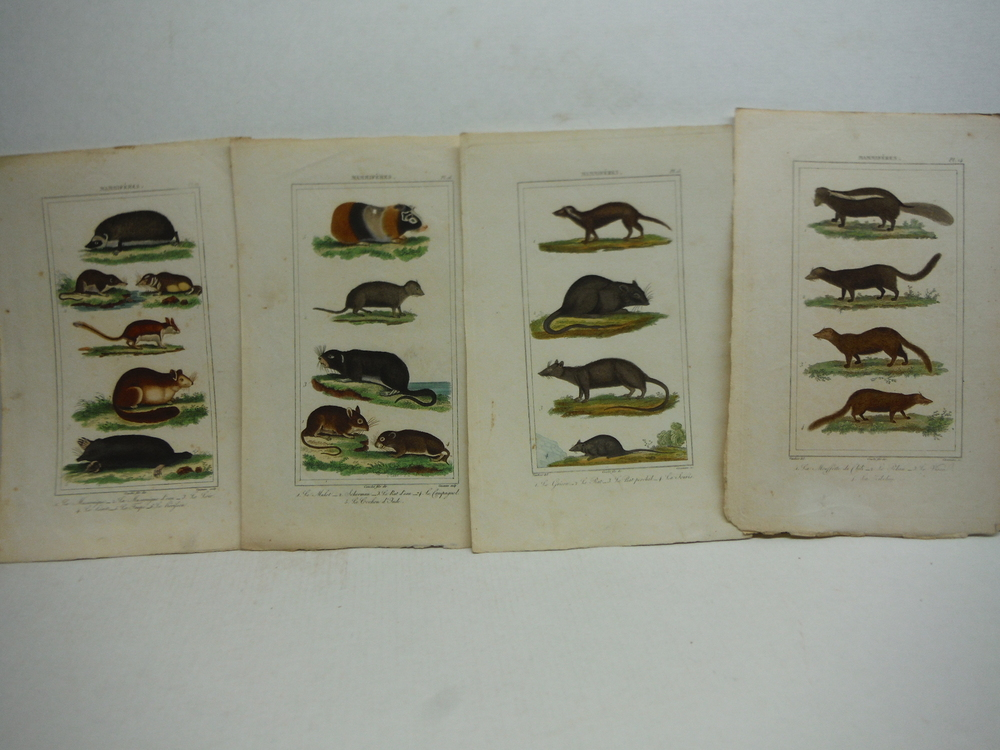 Image 4 of A. C. Vauthier hand colored mammalian engravings lot of 26 (1827)