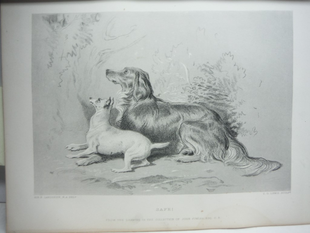 Charles G. Lewis  Antique Steel Engraving  Safe ! after a Painting by Sir E. L