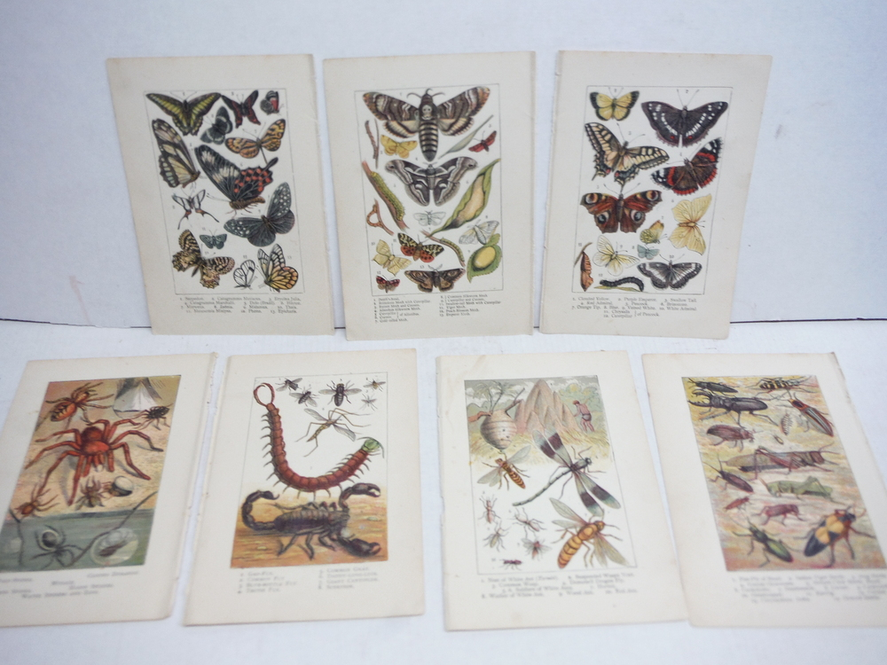 7 Baxter Kronheim Oil Colour  Insect  Prints 1865