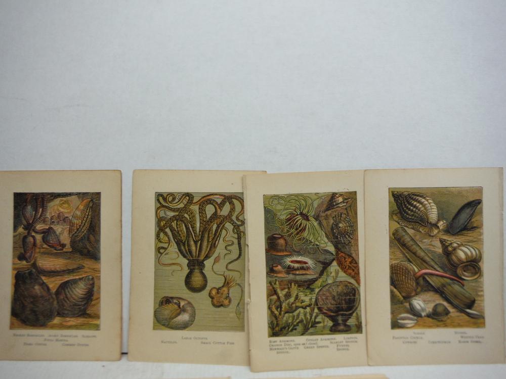 Image 1 of 8 Baxter Kronheim Oil Colour  Sea creature prints 1865