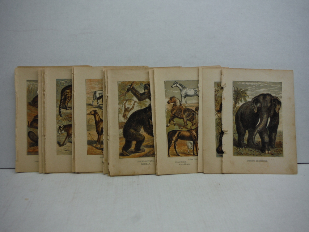 Image 1 of 45 Baxter Kronheim Oil Colour  Mammal prints 1865