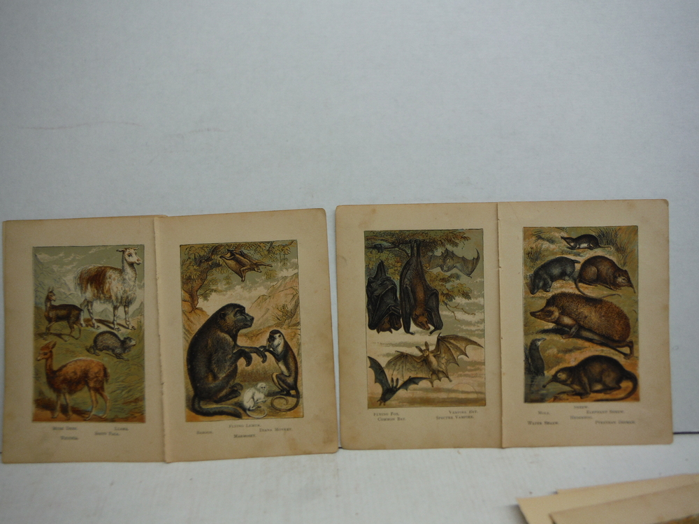 Image 2 of 45 Baxter Kronheim Oil Colour  Mammal prints 1865