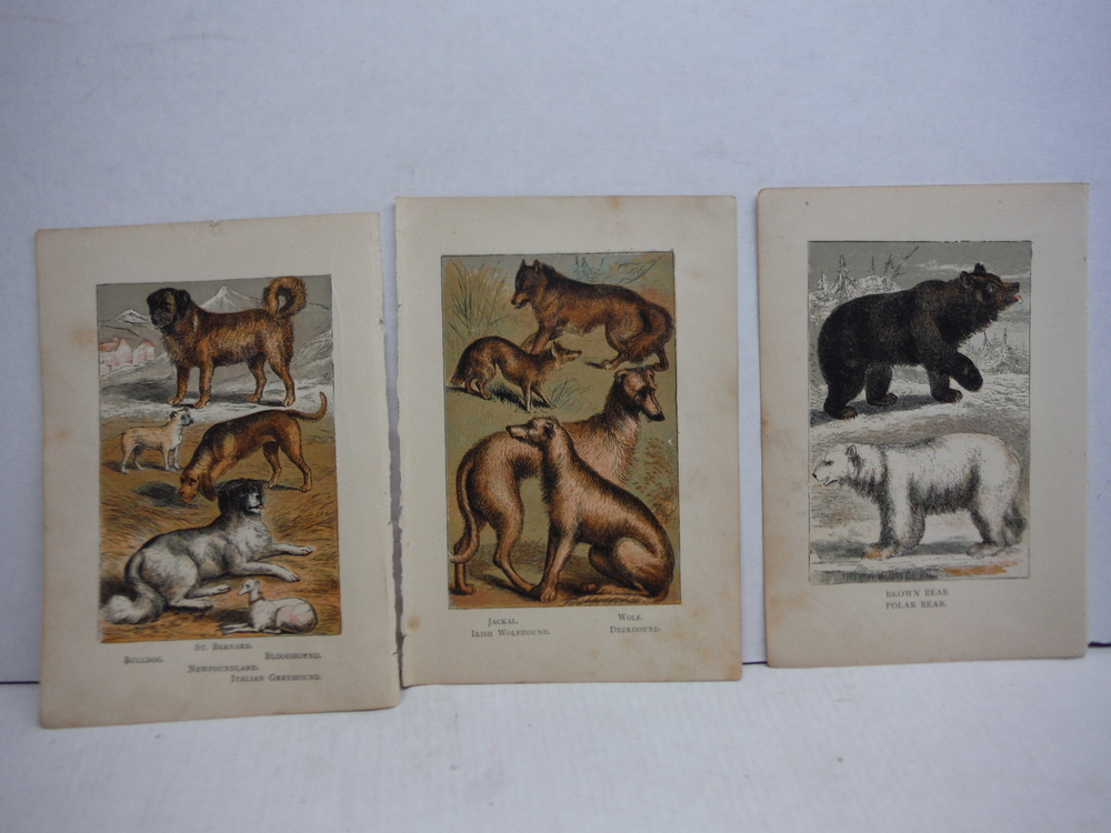 Image 3 of 45 Baxter Kronheim Oil Colour  Mammal prints 1865