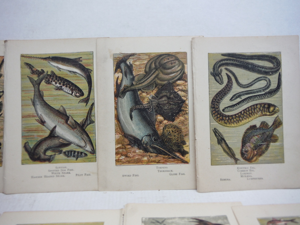 Image 1 of 8 Baxter Kronheim Oil Colour  Fish Prints 1865