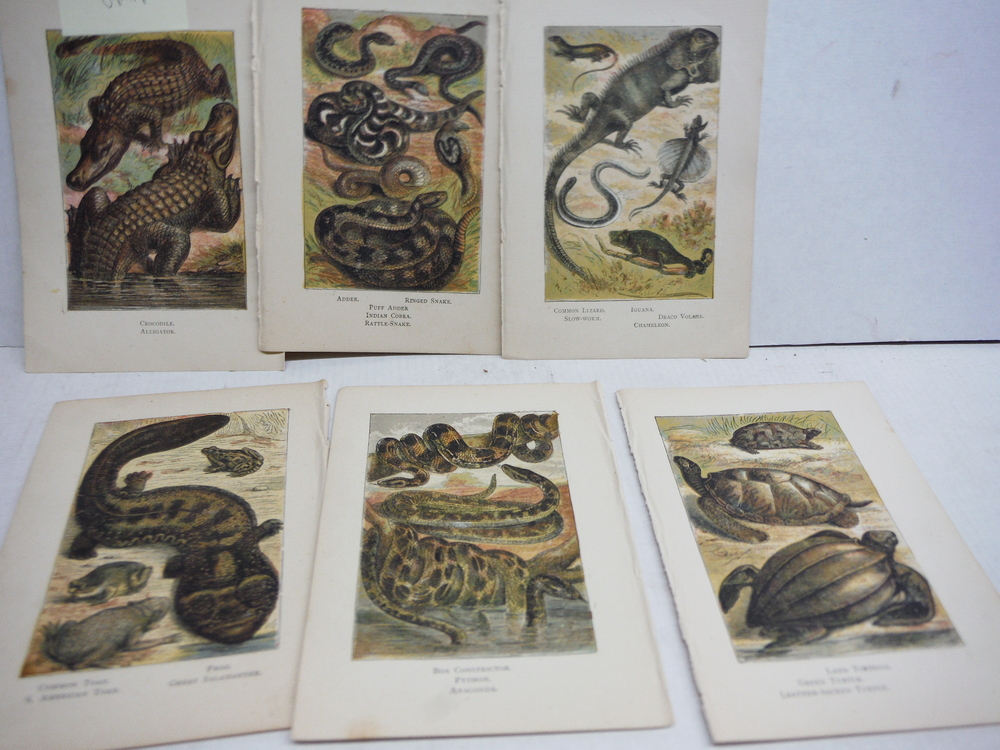 6 Baxter Kronheim Oil Colour Reptile Prints 1865