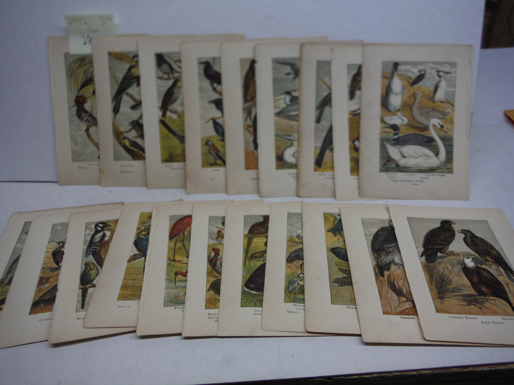 20 Baxter Kronheim Oil Colour Bird Prints 1865