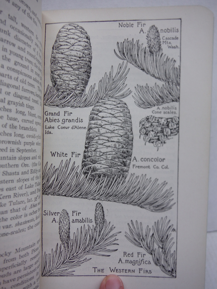 Image 1 of Field Book of American Trees and Shrubs
