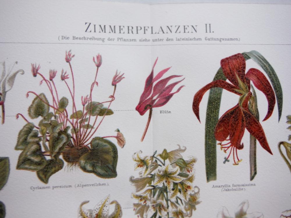 Image 1 of Meyers Antique  Chromolithographs ZIMMERPFLANEN I & II  (1890)