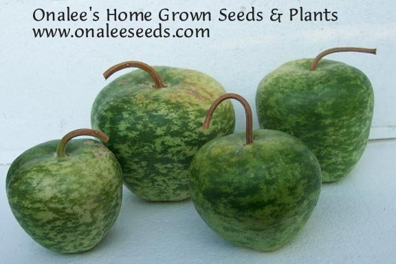 Image 1 of Apple Gourd Seeds  - Lagenaria Siceraria - Crafts! Great for Kids!