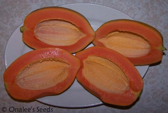 Large Red Caribbean Papaya Seeds (Carica papaya) Tropical / Flavorful!