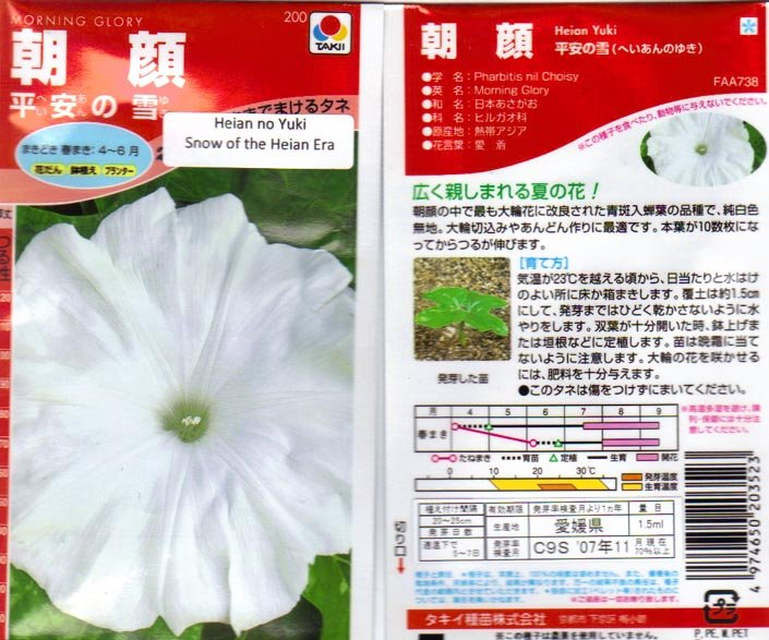 Image 1 of Heian No Yuki, Snow of the Heian Era,Japanese Morning Glory Seeds, Ipomoea Nil