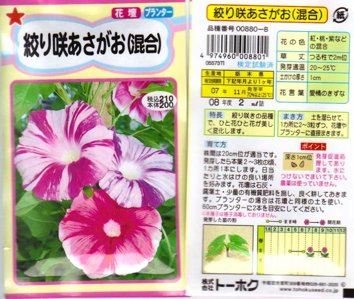 Image 1 of Japanese Morning Glory Seeds: Shibori Asagao Large Flowered Mix Japanese Morning