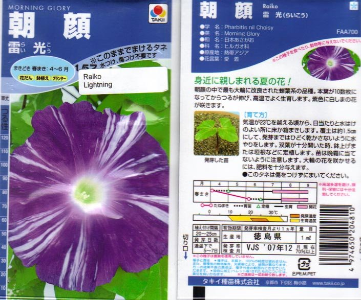 Image 1 of Raiko -''Lightning'' Large Purple blooms w/white stripes Japanese Morning Glory